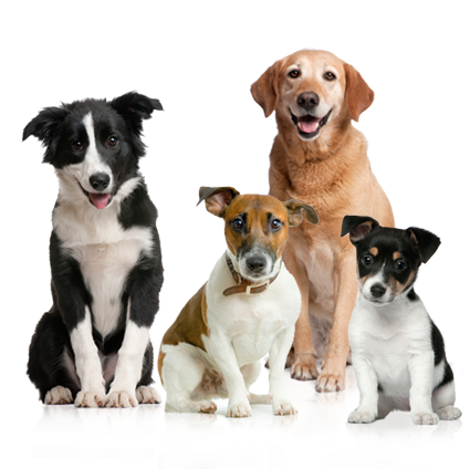 Cute dog png. Family