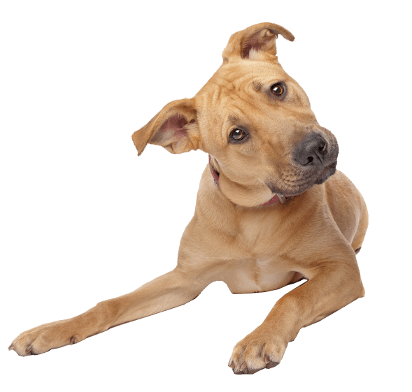 Cute dogs png. Dog transparent background