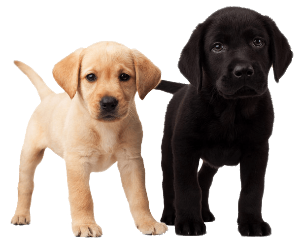 Cute puppies transparent stickpng. Puppy png vector free stock
