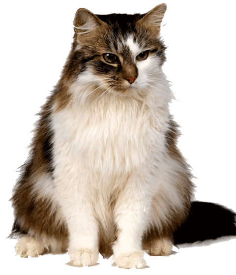 Kittens transparent different. Download cute png images