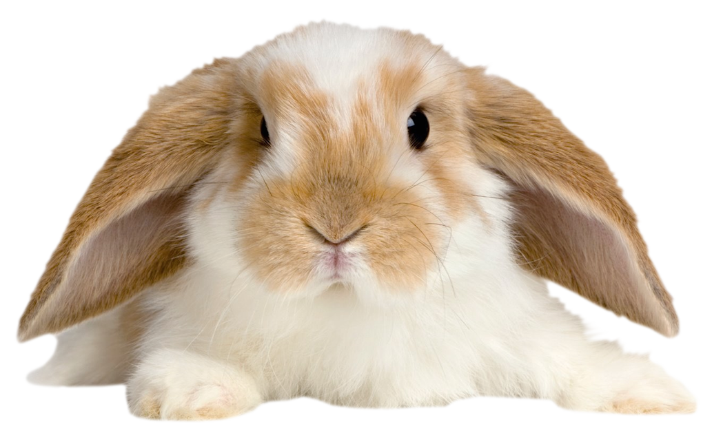 Cute rabbit png. Transparent picture gallery yopriceville