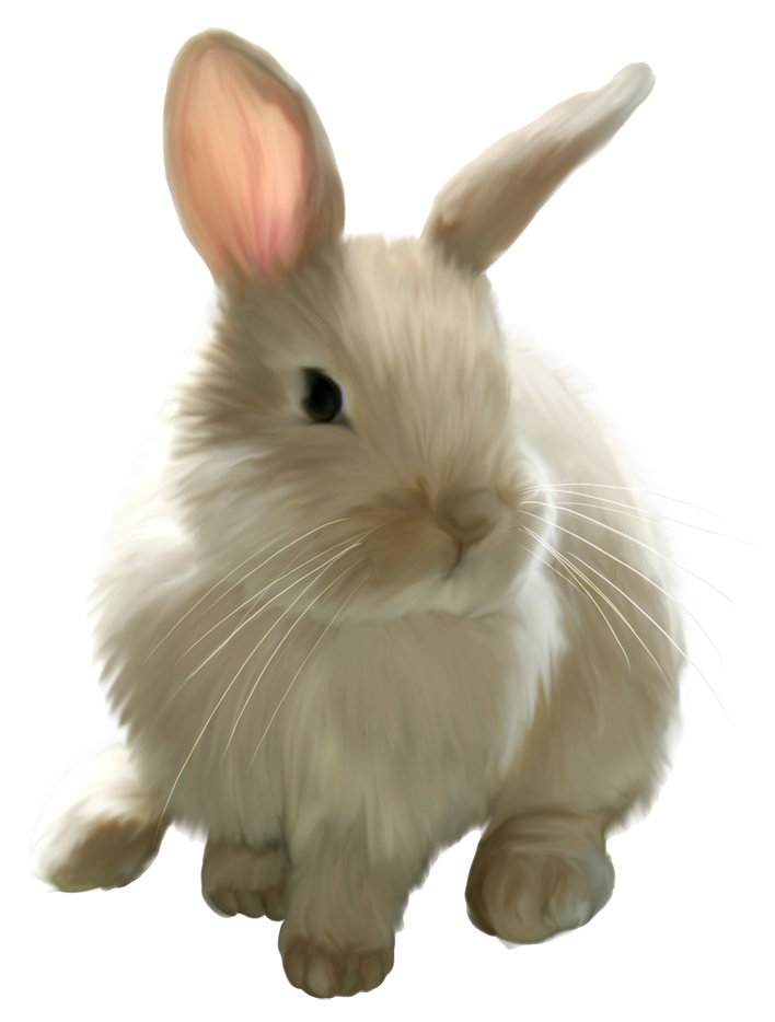 Cute rabbit png. Painted bunny picture clipart
