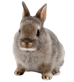 Cute rabbit png. Transparent stickpng
