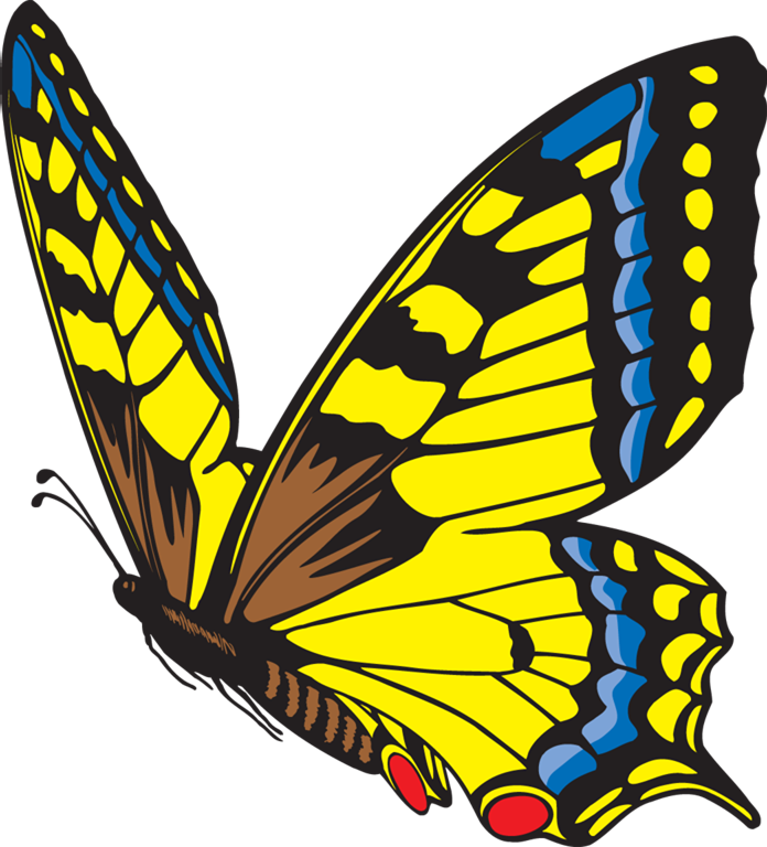 Cycle clipart butterfly. Metamorphosis the life of