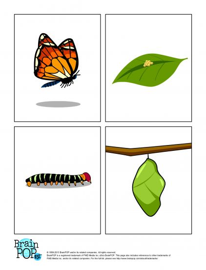 Cycle clipart butterfly. Life at getdrawings com