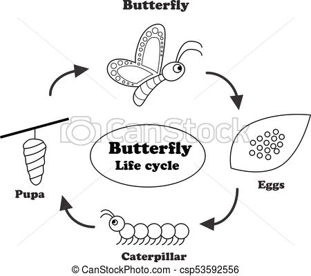 Life in outline style. Cycle clipart butterfly banner