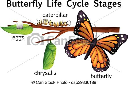 Cycle clipart butterfly. Life stages illustration csp vector transparent stock