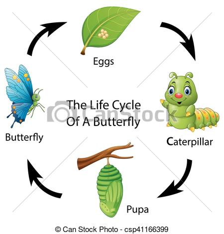 Vector illustration of the. Cycle clipart butterfly graphic library