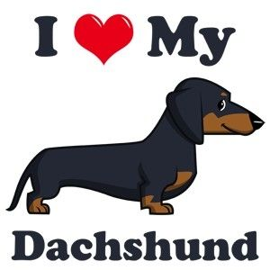 Dachshund clipart chiweenie. I have a humor