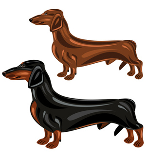 Two dogs in show. Dachshund clipart dpg image royalty free stock