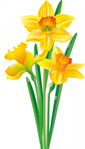 Flower e ec daorig. Daffodil clipart image library