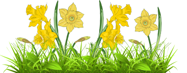 Free border cliparts download. Daffodil clipart easter png freeuse library
