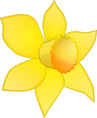 Daffodil clipart. Free graphic black and white library