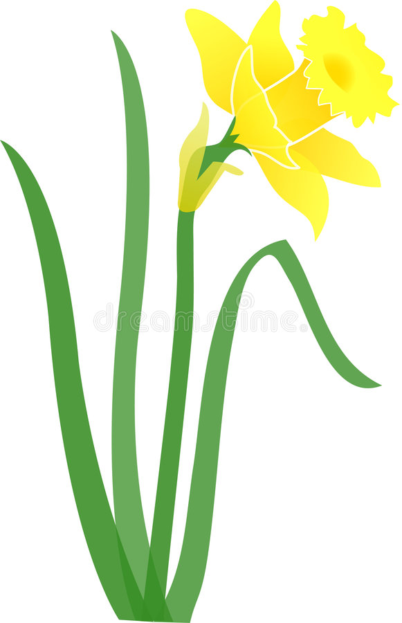 Daffodil clipart bloom. Jonquil eps stock vector clipart transparent library