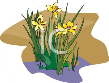 Daffodil clipart bloom. A plant in royalty clip freeuse
