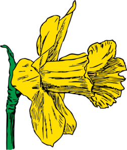 Clip art at clker. Daffodil clipart bloom clip art library stock