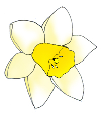 Spring flower pictures pale. Daffodil clipart bloom clipart transparent library
