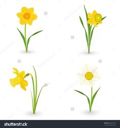Flower clip art panda. Daffodil clipart bloom banner library library
