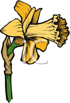 A flower royalty free. Daffodil clipart bloom royalty free stock