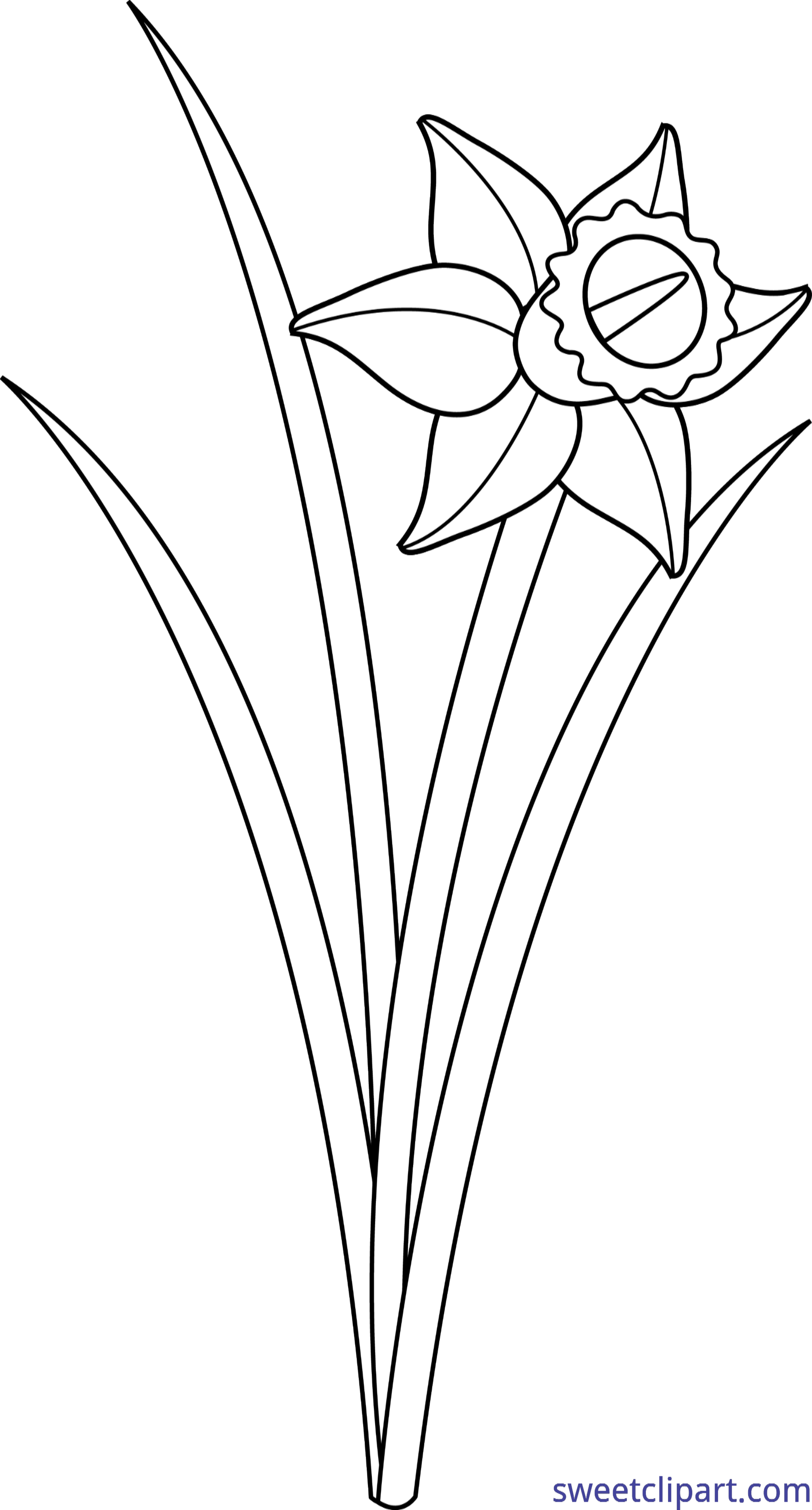 Lineart clip art sweet. Daffodil clipart easter vector royalty free