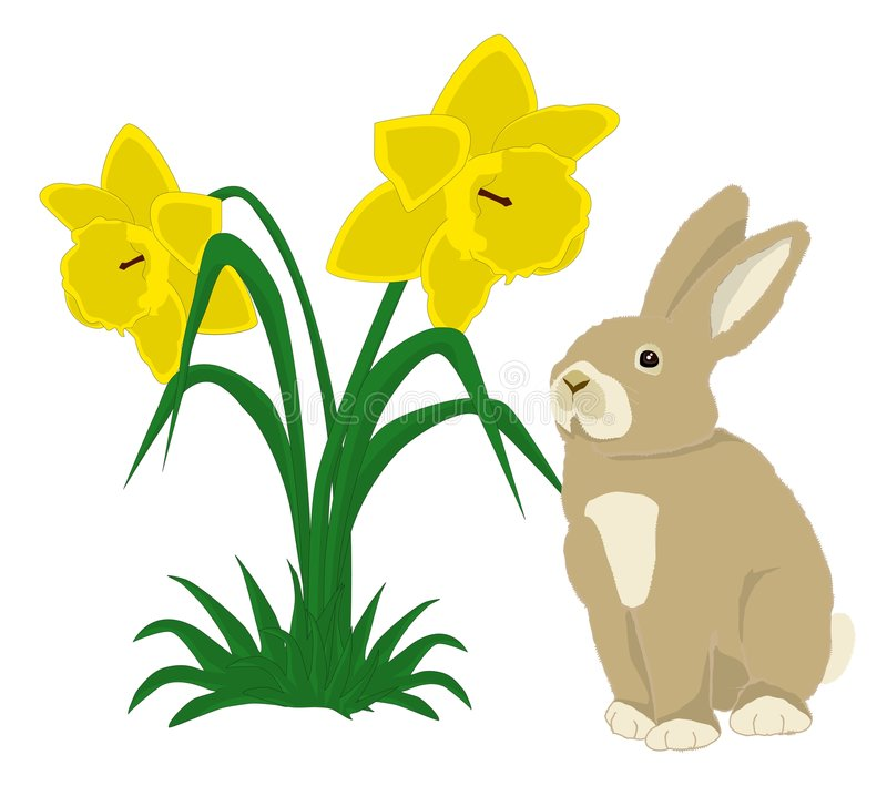 Daffodil clipart easter. Bunny with daffodils stock png free library