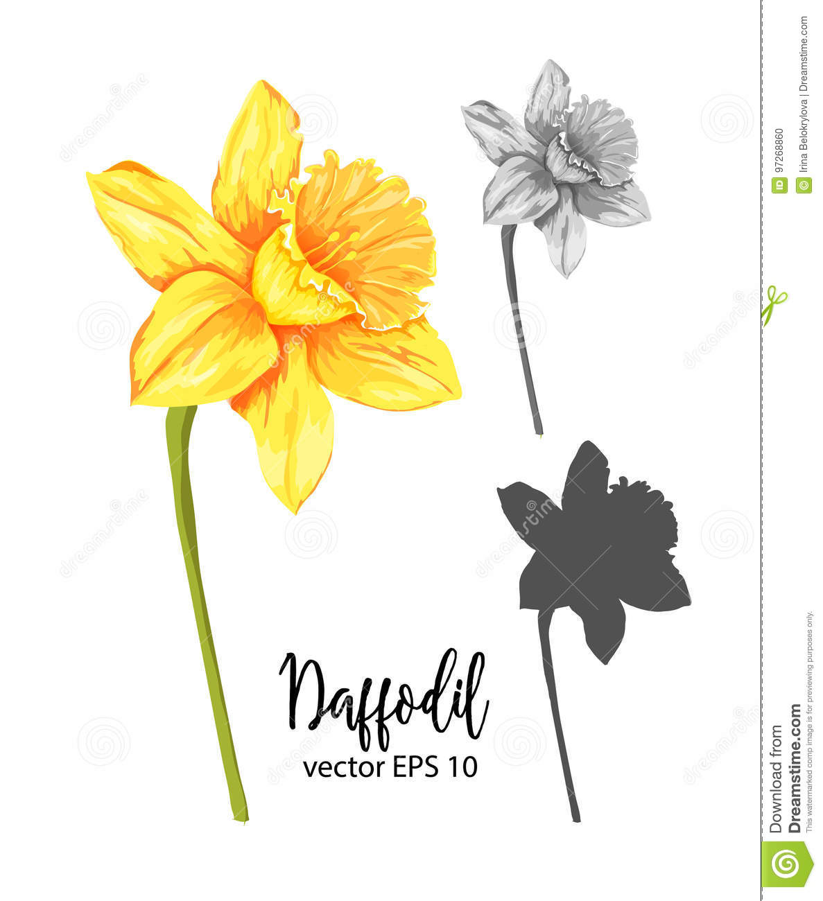 Vector realistic narcissus set. Daffodil clipart flower blossom svg royalty free stock