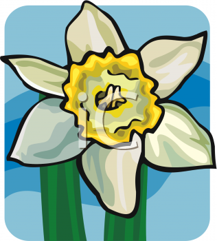 A bloom royalty free. Daffodil clipart flower blossom vector royalty free