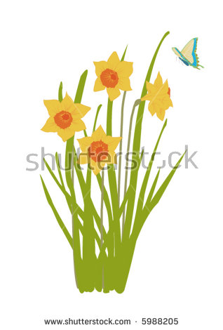Daffodil clipart flower blossom. Illustration plant bloom butterfly clipart black and white