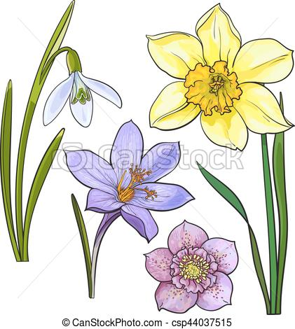 Set of summer flowers. Daffodil clipart illustration graphic transparent library