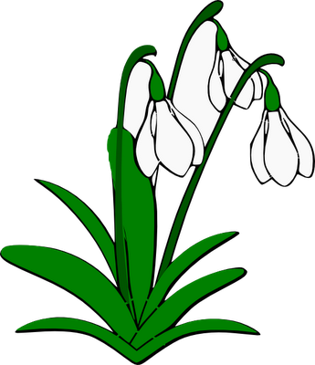 Snowdrops and . Daffodil clipart illustration clipart transparent