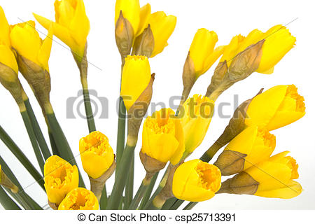 Closeup bouquet of yellow. Daffodil clipart lily clip art download