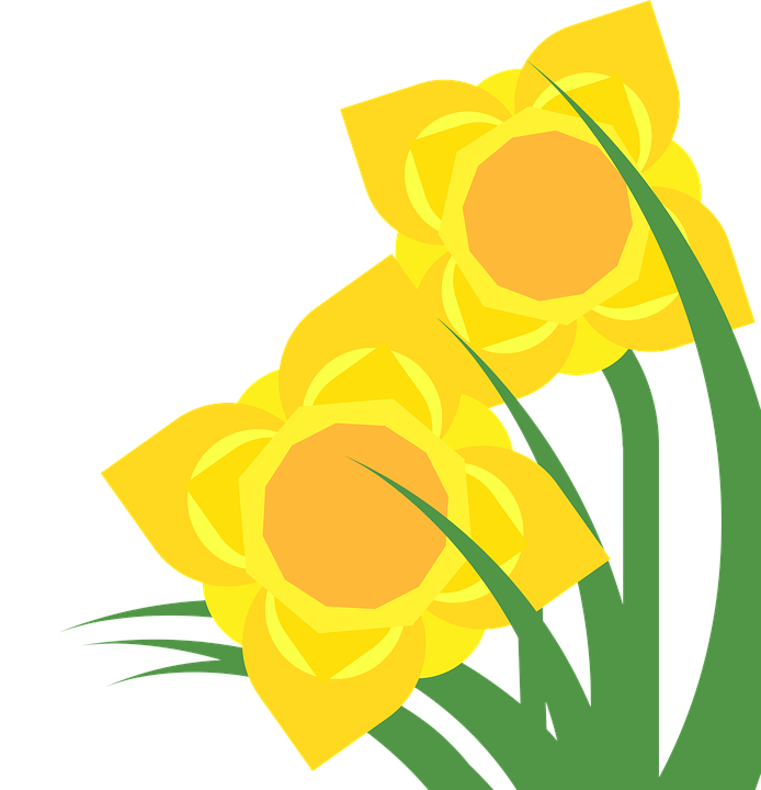 Daffodil clipart lily. Free image on pixabay