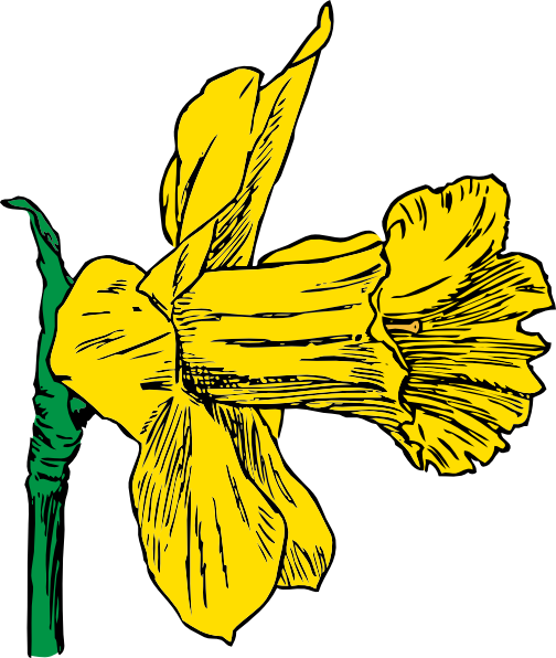 Free drawings of daffodils. Narcissus drawing clip freeuse download