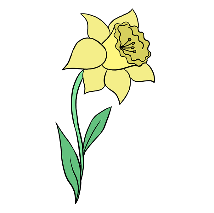 Daffodil clipart lily. How to draw a