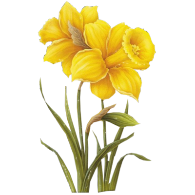 Daffodil clipart lily. Png images basket of