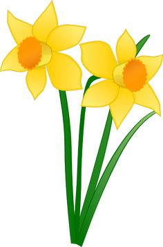 daffodil clipart lily