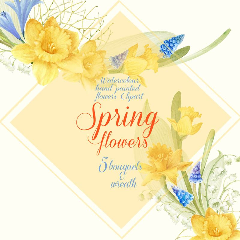 Spring flowers watercolor muscari. Daffodil clipart lily jpg transparent library