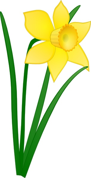 Drawing at getdrawings com. Daffodil clipart printable picture transparent library