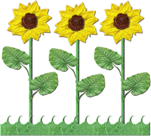 Flowers of sunflowers free. Daffodil clipart row download