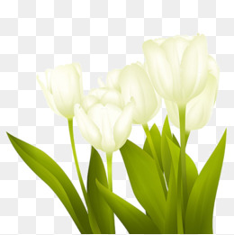White png vectors psd. Daffodil clipart tulip banner freeuse library