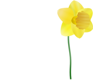 Daffodil clipart tulip. Single plucked clip art
