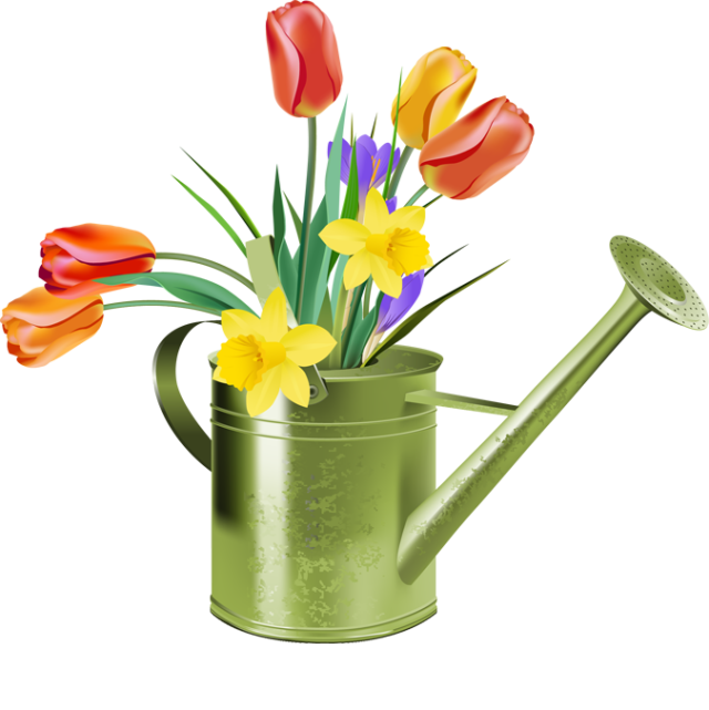 Transparent spring tulip. Free tulips cliparts download