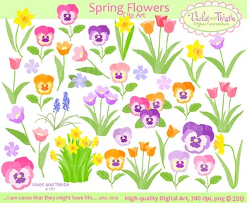 Daffodil clipart tulip. Spring flowers bundle color