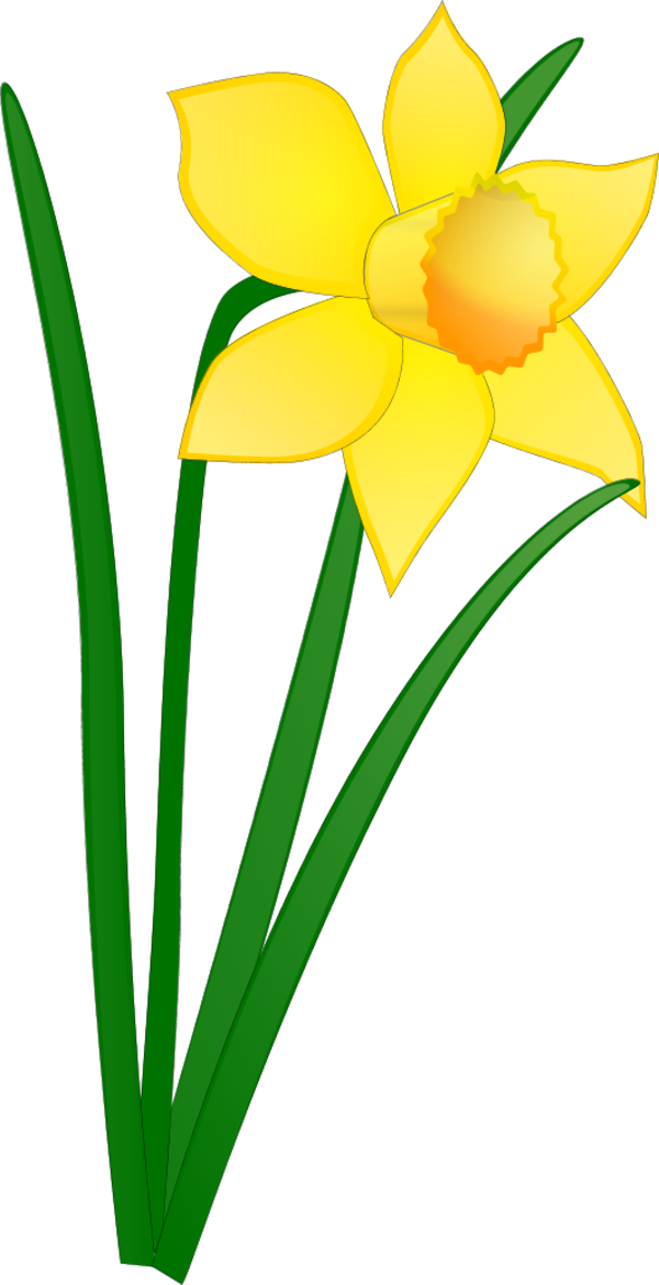Free on dumielauxepices net. Daffodil clipart wind picture royalty free stock
