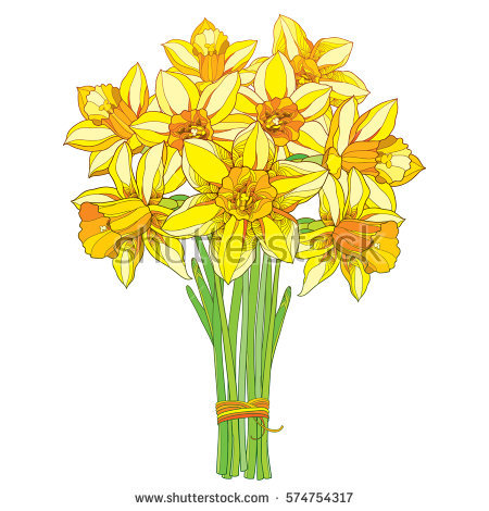 Daffodil clipart yellow daffodil. Vector bouquet outline narcissus jpg royalty free stock