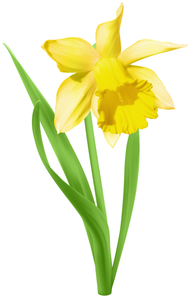 Transparent png clip art. Daffodil clipart yellow daffodil image transparent library