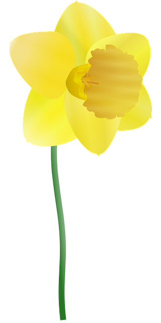 Daffodil vector. Graphics rr collections free