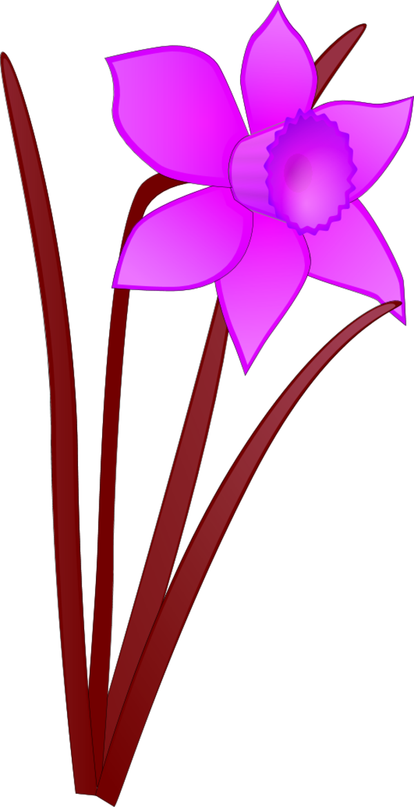 Daffodil vector. Free images download clip