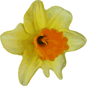 Daffodil vector cartoon. Narcissus free commercial clipart