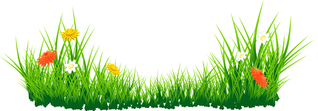 Daffodil vector grass. With daffodils png clipart